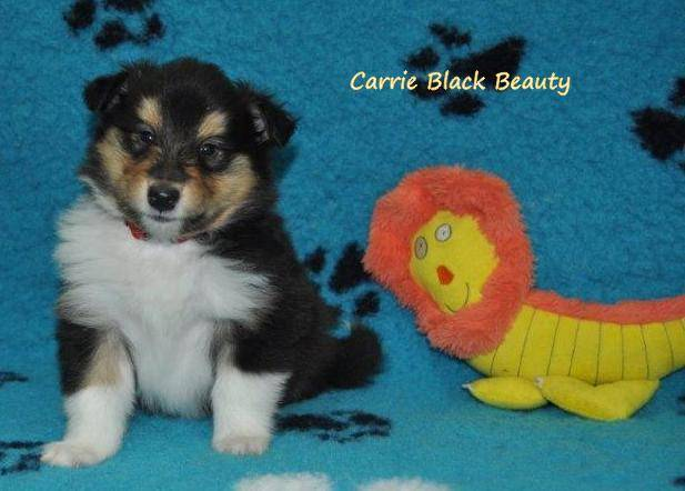 Carrie Black Beauty
