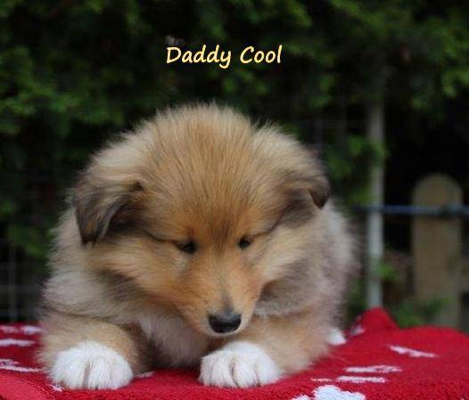 Daddy Cool 53.Tag