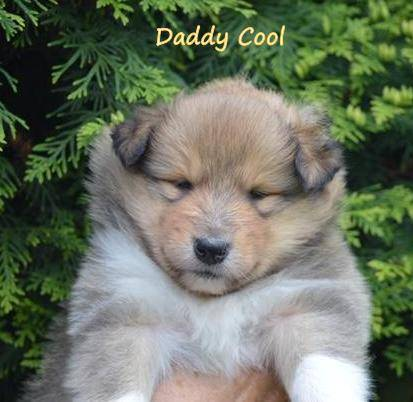 Daddy Cool1