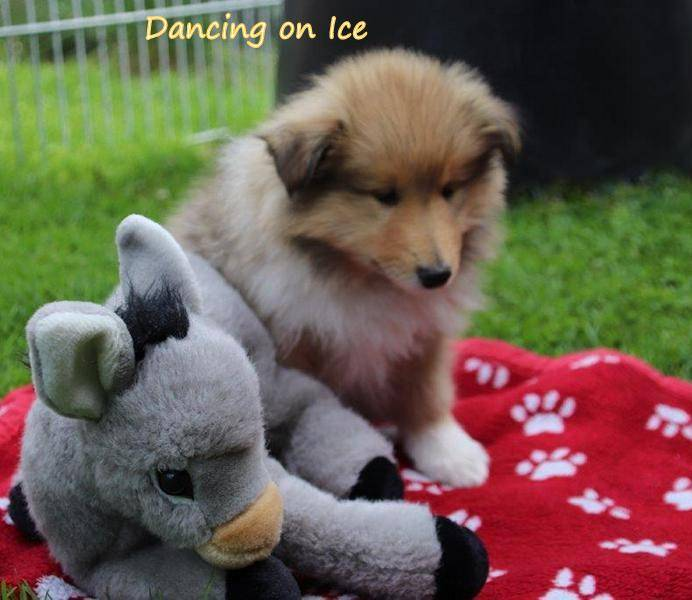 Dancing on Ice 53.Tag